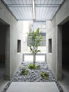 Love this. A small tree within the concrete building