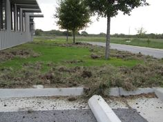 Texas Parks and Wildlife shared Texas Parks and Wildlife Inland Fisheries - San Antonio & Southwest TX's photo.  Feral hogs were here. Look at the damage they caused Tuesday night at our Inland Fisheries office in San Antonio.