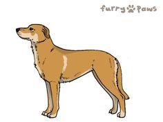 Furry Paws // WCT Kip's Cascade [Lla 2STM 7HH 3hh 1.413] 6.0 487's Kennel
