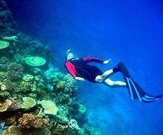 Great Barrier Reef corals eat plastic