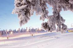 Winterwonderland | Ruka | Finnish winter