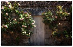 Doorns... | Natuur foto van Mauriliers | Zoom.nl