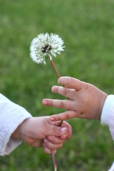 Dandelion Wishes ~ Vivi & Oli Blowing Dandelion, Dandelion Wish, Dandelion Clock, Dandelion Flower, Make A Wish, All You Need Is, Told You So, Wish Come True, Butterfly Kisses