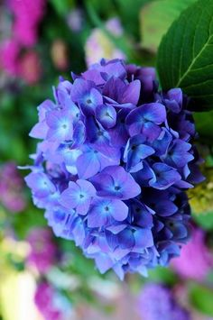 Watercolors In The Rain Bokeh Flora Flowers, Flowers Nature, Exotic Flowers, Purple Flowers, Beautiful Flowers, Peonies And Hydrangeas, Hydrangea Flower, Flower Pots, Belle Plante