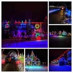 Best bang for your buck. Which of three light festivals in Calgary, Zoo Lights, Lions Festival of Lights, and Airdrie Festival of Lights is the best. Zoo Lights, Festival Lights, Calgary, Lions, Night, Ideas, Lion, Thoughts