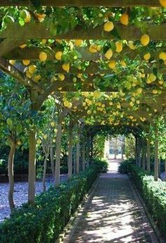 Lemon Street, Positano, Italy