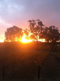 Sunrise. Clare Valley, South Australia great spot for lovely wines  Submitted by @PikeNeil  17/09/2012