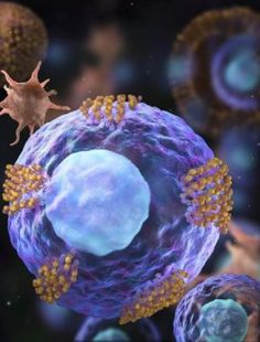 A Research module on #Decorated' #stemcells could #offer #targeted #heart #repair http://cardiologycare2018.blogspot.in/2018/02/decorated-stem-cells-could-offer.html Contact: cardiology@healthconferences.org