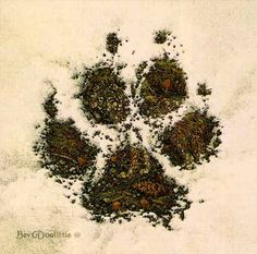 White Wolf: Bev Doolittle - Wildlife Artist Specializing in Watercolors