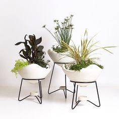 Pedro Planter# I want this