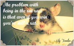 """A post about the medical aspects of stress.  """"The problem with being in the rat race  is that even if you win  you're still a rat."""""""
