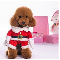 Christmas clothes with hat for Puppy