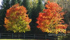"""""""Fall Colors""""  by: © Michael Ray 25% discount on all pieces in my fine art gallery. See my home page for discount code. http://fineartamerica.com/profiles/3-michael-ray.html"""