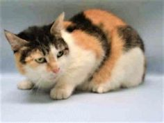 SUSIE – A1103324 - OWNER ILL - ALREADY SPAYED AND NEEDS A HOME!