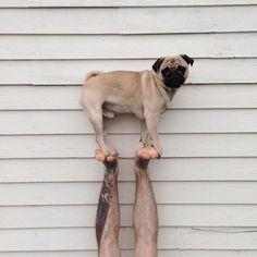 Pug up.