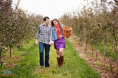 find local orchards and go fruit picking