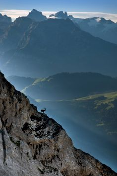 Watching over Switzerland: Pilatus Ibex