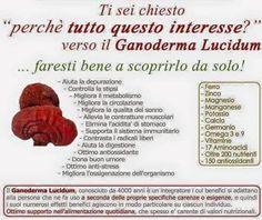 Maggiori informazioni sul Ganoderma Lucidum le trovi sul Blog http://ganoderma-salute.com