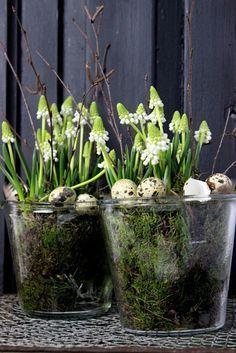 Katjas-Home: Happy Easter Easter Flowers, Spring Flowers, Spring Decoration, Garden Bulbs, Spring Bulbs, Deco Floral, Easter Table, Spring Home, Easter Crafts