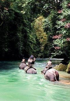 Elephant Trekking, Koh Chang, Thailand