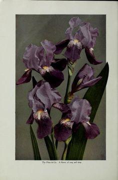 The iris catalog