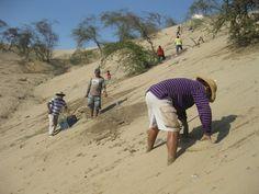 A Rocha Peru people, planting huarango in the southwestern coastal desert near Ica.