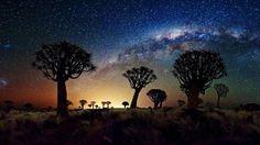 Floresta da árvore do Quiver, Namíbia