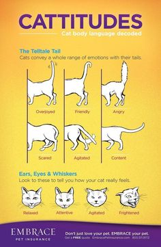 Learn to read your cat's body language! For more on cat body language ... #Behaviour - More about Cat Behaviour at http://Catsincare.com! #catfacts