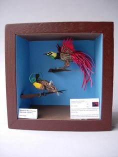 Birds of Paradise, - Miranda Brandon