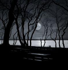 Moonlit Stroll by Robin Lee-Vieira
