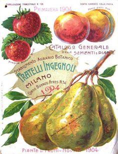 Fratelli Ingegnoli, Milan - gardening catalogue