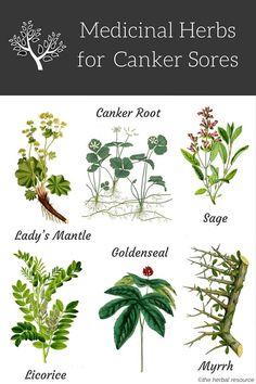 herbs canker sores
