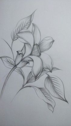40 Easy Flower Pencil Drawings For Inspiration Easy Pencil Drawings, Pencil Drawings Of Flowers, Dark Art Drawings, Beautiful Drawings, Art Drawings Sketches, Cute Drawings, Flower Sketch Pencil, Pencil Sketch Drawing, Flower Sketches