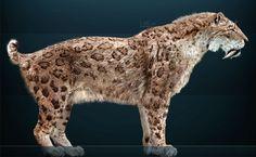 Tigre-dentes-de-sabre (Smilodon fatalis) - animal extinto. Há 10 mil anos, o tigre-dentes-de-sabre, também conhecido como Smilodon, caçava no continente americano, mas mudanças climáticas e a caça predatória realizada por humanos levaram a espécie à extinção. Hoje existem fósseis bem preservados que foram encontrados nos poços de piche de La Brea, na Califórnia, que poderiam fornecer o material genético necessário para começar um projeto de desextinção
