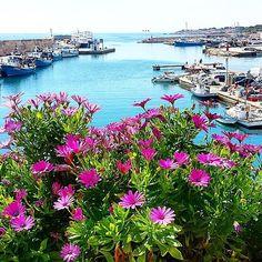 #Photo by @digital6 #ametllademar #ametllamar #terresdelebre #tarragona #catalunya #catalogne #cataluña #catalonia #pesca #fishing #pêche #platja #playa #plage #beach #estiu #verano #été #summer #sun #vacances #vacaciones #holiday #traveling #viajes #travel #visit #eatheword #vamosdeviaje #voyage #escapadas #experiences #traveller #food #gastronomia #gastronomy # happyholidays #mediterrani #mediterraneo #mediterranean #visiting #vacation #trip #tourism #tourist #reservadelabiosfera