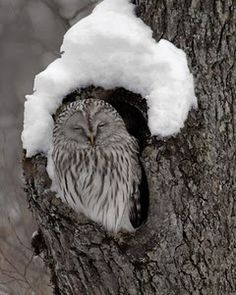 Snow with owl