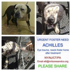 URGENT FOSTER NEEDED FOR ACHILLES! Achilles (approx. 1.5 yrs, 68lbs.) has some sort of eye trauma - he is at Manhattan AC&C and needs medical treatment NOW. He is very sweet and friendly, but is in considerable pain. We want to pull him and seek treatment immediately but we MUST have a foster home lined up in NY/NJ/CT/PA. If you can help, please email elli@mrbonesandco.org PLEASE SHARE - this sweet boy is in pain!