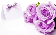 Purple and Pink Roses Wallpaper | Roses Wallpapers - Rose Backgrounds | Top Wallpapers | Free Wallpaper ...