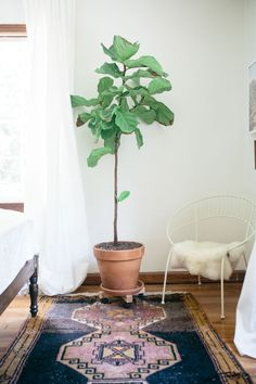 patterned rug, wire chair and fig leaf tree   home style   bedroom design idea