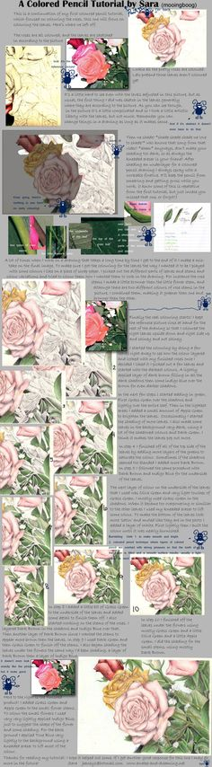Rose Colored Pencil TutorialII by mooingboog on DeviantArt