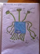 My monster has got... drawing a fantasy monster can help learn body parts and the use of 'have got' by Nicole age 8