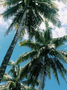 Beach Aesthetic, Summer Aesthetic, Aesthetic Photo, Tumblr, Coconut Palm Tree, Social Media Marketing Agency, Landscape Wallpaper, Tropical Paradise, Paradise City