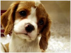 The Cutest Puppies in the World (18 photos) - My Modern Metropolis