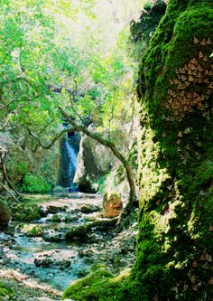 Valley of Butterflies, Rhodes, Greece beautiful place to visit
