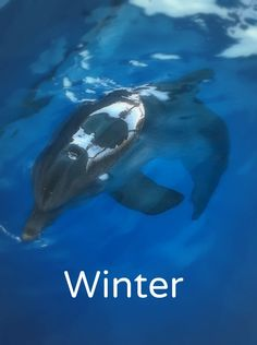 We met Winter The Dolphin at the Clearwater Marine Aquarium!