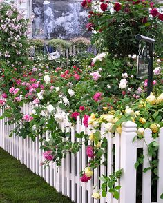 English roses tumble romantically through a white picket fence on David Austin's stand at the Chelsea Flower Show, May 2013 Picket Fence Garden, White Picket Fence, Garden Fencing, Garden Landscaping, Rose Garden Design, Cottage Garden Design, Cottage Garden Plants, Garden Roses, Fruit Garden
