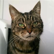 Belle - Cat Rehoming & Adoption - Wood Green Animals Charity #adoptdontshop