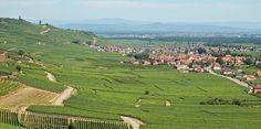 Paysage du vignoble près de Kaysersberg