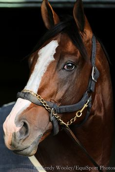 Union Rags- Since I'll Have Another couldn't run, I'm glad Michael Matz's horse won!