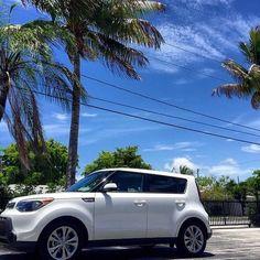 #KiaSoul meets sol.  #Sunny #PalmTrees #BlueSky #KiaSpotting #CarSpotting